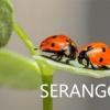 Nama Serangga dalam Bahasa Jepang