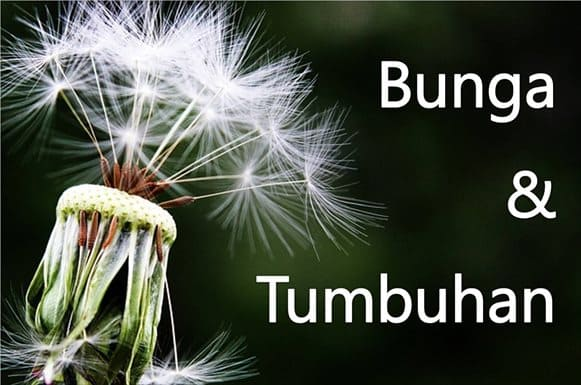 Nama Bunga Dan Tumbuh Tumbuhan Dalam Bahasa Jepang Belajar